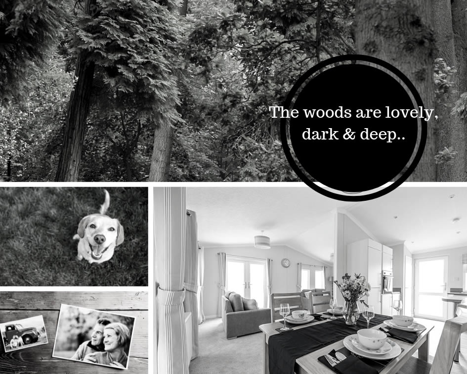 the woods are lovely dark and deep blog banner
